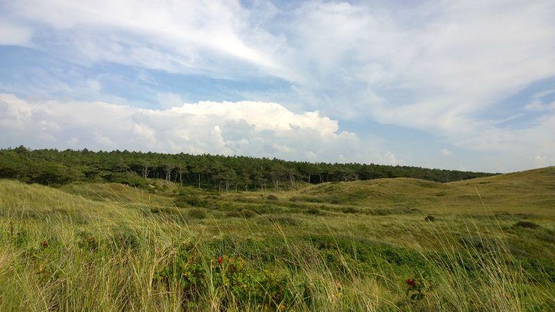 Holland dune