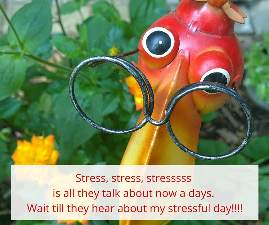 stressful bird